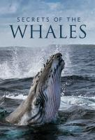 Poster voor Secrets of the Whales